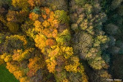 Above the canopy Autumn colours (Steve Samosa Photography) Tags: prescot england unitedkingdom gb