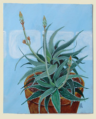 Aloe (M.P.N.texan) Tags: paint painting acrylic acrylics aloe succulent plant botanical handpainted original mpn