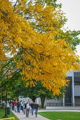Green Bay Fall Colors-9