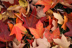 Fall Colors by Liesl-3