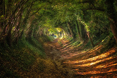 Tree Tunnel (- Andy Gardner -) Tags: treetunnel trees explore sussex chichester naturephotography naturalspring autumn fall