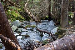Little Rapids (Clif Budden) Tags: 2018 bowringpark canada environment nl nature newfoundland october outdoors stjohns
