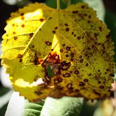 Destruction (matthileo) Tags: 500px lush shrub cultivated aromatic gerbera lemon tree fall autumn leaf leaves light plants flickr facebook katzmatt tumblr