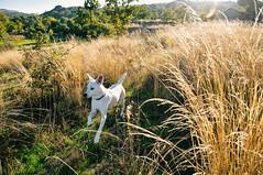 country dog (Gail at Large | Image Legacy) Tags: 2018 icethedog peneladabeira portugal viseu gailatlargecom