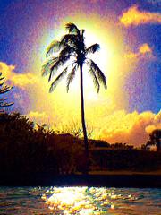 Graphical palm (jonathan charles photo) Tags: palm silhouette shore bermuda hungrybay graphic landscape sun unreal art manipulation photo jonathan charles