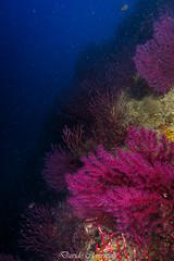 IMG_1309 (davide.clementelli) Tags: diving dive dives padi immersione immersioni ampportofino portofino liguria friends amici underwater underwaterlife sottacqua