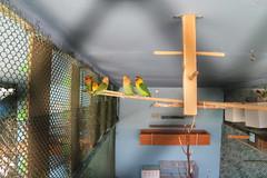 2018-09-19_11-04-39CanonEOS1_IMG_2544_Kiri (Miguel Discart Photos Vrac 3) Tags: 2018 animal animalphotography animals animalsupclose animaux bird birds canon canoncanoneos1100d canoncanoneos1100defs1855mmf3556iii canoneos1100d efs1855mmf3556iii feathers holiday hotel hotels iso200 kamelya kamelyacollection kamelyahotelselin nature naturephotography oiseau oiseaux pet travel turkey turquie vacances voyage