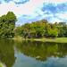 Nicolae Romanescu Park - Lake Pano