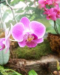 Washington National 100_2302 (BlackJack8097) Tags: flowers washington dc mall pink national arboretum horticulture