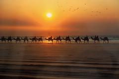 10003508.jpg (KevinAirs) Tags: camels camel kevinairs ocean sunset travel westernaustralia ©kevinairswwwkaozcomau sand sky landscape landscapes beach australia sea jacquihawkins