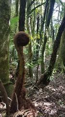 Slow Tour Brasil Roteiro Igrejinha RS (59) (slowtourbrasil) Tags: sustentabilidade passeios natureza roteiros experiência slow tour brasil nature