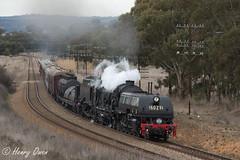 Coota Climbin' (Henry's Railway Gallery) Tags: 6029 ad60class thnsw transportheritagensw heritagetrain nswgr steamtrain cruiseexpress 6s65 passengertrain cootamundra