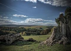 Tree stumps, West Dean estate. (Brian Southward) Tags: landscape sky hdr easyhdr trees sheep westdean
