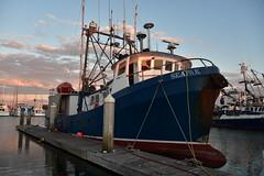 Purse Seiner SEAPAK - Nikon D750 - AFS Nikkor 28-300mm 1:3.5-5.6G VR (divewizard) Tags: nikond750 nikon d750 dslr fx afsnikkor28300mm13556g afs nikkor 28300mm 13556g vr f3556 zoomlens zoom lens 28300mmf3556gvr chrisgrossman venturaharbor ventura venturacounty california boat purseseiner vessel fishing fishingboat commercial commercialfishingboat sunset goldenhour reflection ocean water harbor marina slip boats dock berth pacific sea commercialfishing buoy buoys netbuoy netbuoys bumpers squidboat squid marketsquid loligoopalescens seapak cf9804 bulbousbow