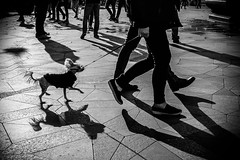 Images on the run.... (Sean Bodin images) Tags: streetphotography streetlife strøget seanbodin streetportrait copenhagen citylife candid city citypeople dog
