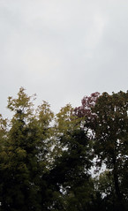 (eelend) Tags: colour chorin nature autumm sky trees branches leaves original