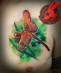 Red Dragonfly Realistic 3D Color Tattoo by Jackie Rabbit