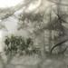 Tender touch -莽山国家森林公园、湖南 Mangshan national park