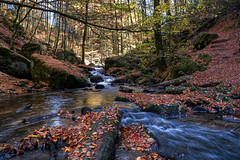 Karlstahl Autumn 2018 (Parchman Kid (Jerry)) Tags: karlstalschlucht trippstadt germany autumn fall leaves color colors tree trees forest creek stream falls parchmankid sony a6500 jerryburchfield burchfield