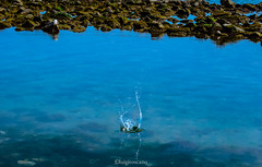 Splash  ( per I.C.) (tosco974) Tags: acqua mare sassi luigi toscano santa severa lazio pietra blu amici photo foto italia italy photografy natura