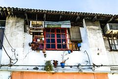 En la ventana (ameliapardo) Tags: plantas flores edificios casas rojo blanco andalucía sevilla españa fujixt2 fujinon1855