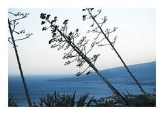 _K001281 (Jordane Prestrot) Tags: ♍ jordaneprestrot tenerife elchorillo arbre tree árbol sunset crépuscule crepúsculo océan ocean océano atlantique atlantic atlantico