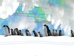 March of the penguins (jeffellis24) Tags: jeffellis music clouds art jeffreyellis backgrounds mixedmedia white snow digitalart fineart abstract pigeons