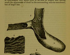 This image is taken from Page 293 of On some points relating to the anatomy and habits of the Bactrian camel (Camelus bactrianus), and on the presence of intestinal glands not before noticed (Medical Heritage Library, Inc.) Tags: camels anatomy histology rcseng ukmhl medicalheritagelibrary europeanlibraries date1865 idb22352120