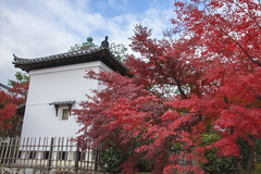 Tenryuji (arbivi) Tags: autumn fall foliage koyo momiji japanese maple tree red orange tenryuji temple kyoto japan canon 60d tamron arbivi raymondviloria