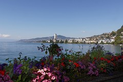 Montreux (perlmic) Tags: lacléman vad montreux fleurs