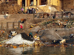 varanasi ashes (kexi) Tags: varanasi benares india asia ashes mementomori death dog cows ghat steps samsung wb690 february 2017 funeral pile water river ganga ganges ritual cremation instantfave