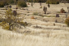 DSC_7890 (Etropolska) Tags: nature natureandnothingelse autumn beautyofnature mothernature walk beautiful