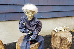 Skeletons - Halloween 2018 (Coastal Elite) Tags: halloween decorations outdoor halifax novascotia canada skeleton spooky home house outside decorated decor outdoors sitting bones treestump stumps squelette décorations skeletons skulls rat animal wig dressed funny frightening trick treat yard décoration