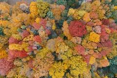 High altitude colorsplosion! (10 25 2018) (PhotoDocGVSU) Tags: fall autumn fallcolor autumn2018 westmichigan uav drone phantom4pro aerialphotography topdown hagarpark jenisonmi