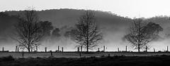 Misty Myall (Wanda Amos@Old Bar) Tags: wandaamos landsacpe minimalism minimalist mist morning sunrise