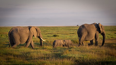 In memory of one of the rare Elephant Twins, who died this week. Amboseli National Park