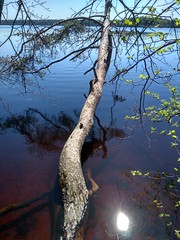 IMG_20180512_132345_HDR (Rustam Bikbov) Tags: горовалдайскоеозеро озеро май 2018 may lake