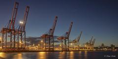 Container Terminal Tollerort - 24091801 (Klaus Kehrls) Tags: hamburg hamburgerhafe containerterminal nachtaufnahme spiegelung