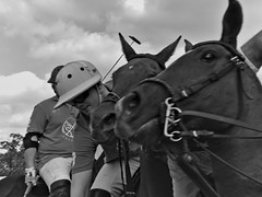 Polo at Museumplein