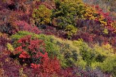 Fall's palet (johan van moorhem) Tags: hungary hongarije eger szilvasvard autumn fall herfst herfstkleuren