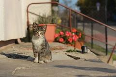 IMG_2799 (piterdeus) Tags: kot kotek cat