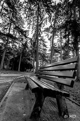 Palms (mathieuo1) Tags: lyon nature blackandwhite bnw europe france park bench leaves autumn contrast sharp wide ultrawide nikon work composition tree landscape fineart graphic mathieuo