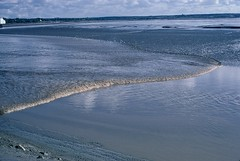 One Foot High Tidal Bore going Up the Petitcodiac River near Moncton, New Brunswick (Joseph Hollick) Tags: newbrunswick tide tidalbore river 35mmfilm 35mm