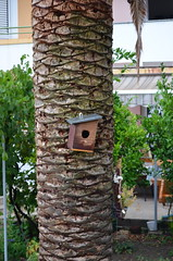 Island Birdhouse [Palit - 25 August 2018] (Doc. Ing.) Tags: 2018 rab croatia otokrab rabisland happyisland kvarner kvarnergulf summer mediterraneansea adriatic nikond5100