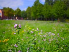 Urban Wilderness (Mathias Munkenbeck) Tags: cologne köln deutschland germany outdoor draussen herbst color colorful mft microfourthird gx8 panasonic autumn