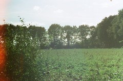 (Mimi & Oly) Tags: holland netherlands nederland lowlands paysbas country countryside fields forest field