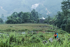 _DSC1327 (BisonAlex) Tags: 越南 vietnam sapa 沙壩 健行 trekking mountain rain could kid peoplelife dog market wood