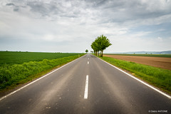 Road in Wierschem (DE) (cedant1) Tags: road tree cloud cloudy green calm minimalist roadtrip germany wierschem rhénaniepalatinat rhénanie spring