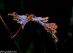 Leaf (2000stargazer) Tags: leaf macro closeup nature reflections dark brown autumn autumncolours fall october canon