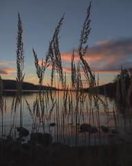 Dawn (malillea) Tags: ngc eikeren norway canonphotography canon naturephotography nature landscapephotography landscape scenery beautifulcolors colors beautiful sunrise dawn